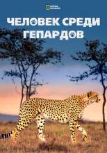 Человек среди гепардов