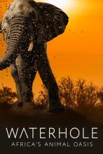 Водопой: Африканский Оазис для Животных