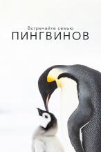 Встречайте семью пингвинов
