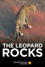 Скала леопардов